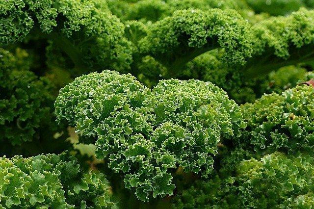 Junk Food Kale