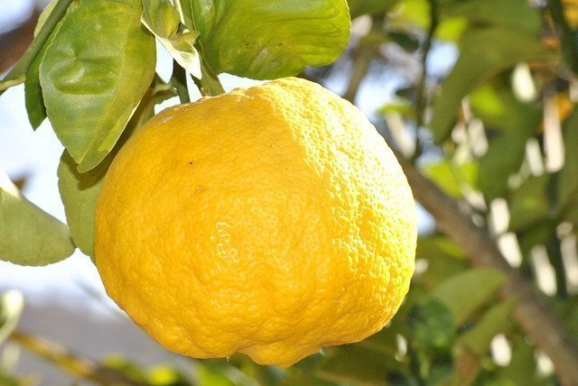 Weight Loss Inducing Snacks lemon