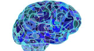 Science Brain