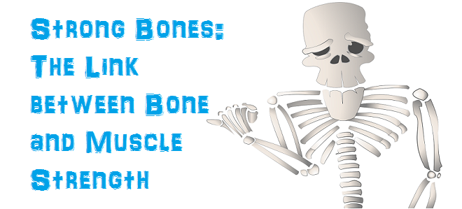 Strong Bones: The Link between Bones and Muscle