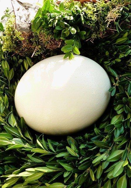 Simple Eating Habits for Radiant Skin Eggs