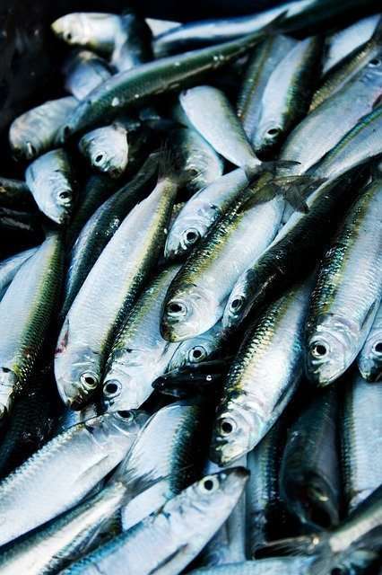 Nutrition and Longevity 5 Must Make Diet Changes Fish