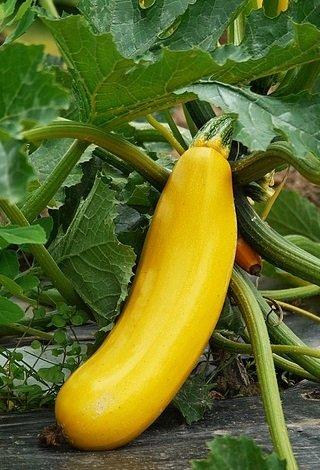 Save $$ 9 Tips To Get Inexpensive Organic Food Veggies