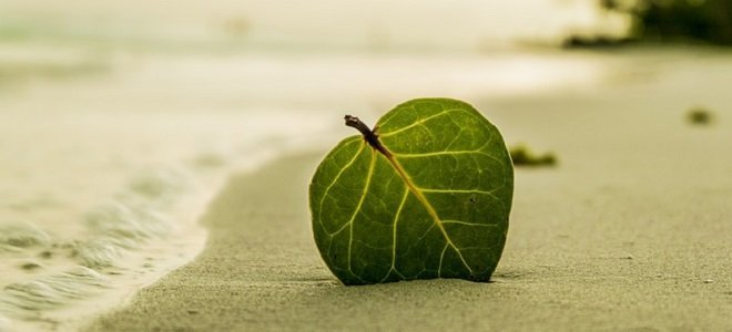self-care, wellness, lifestyle,