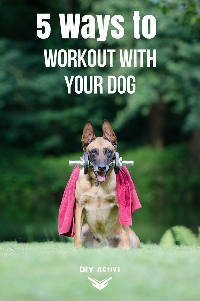5 Methods for Working Out with Your Dog