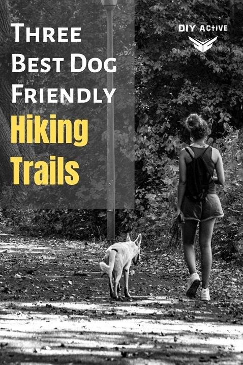 Three Best Dog Friendly Hiking Trails