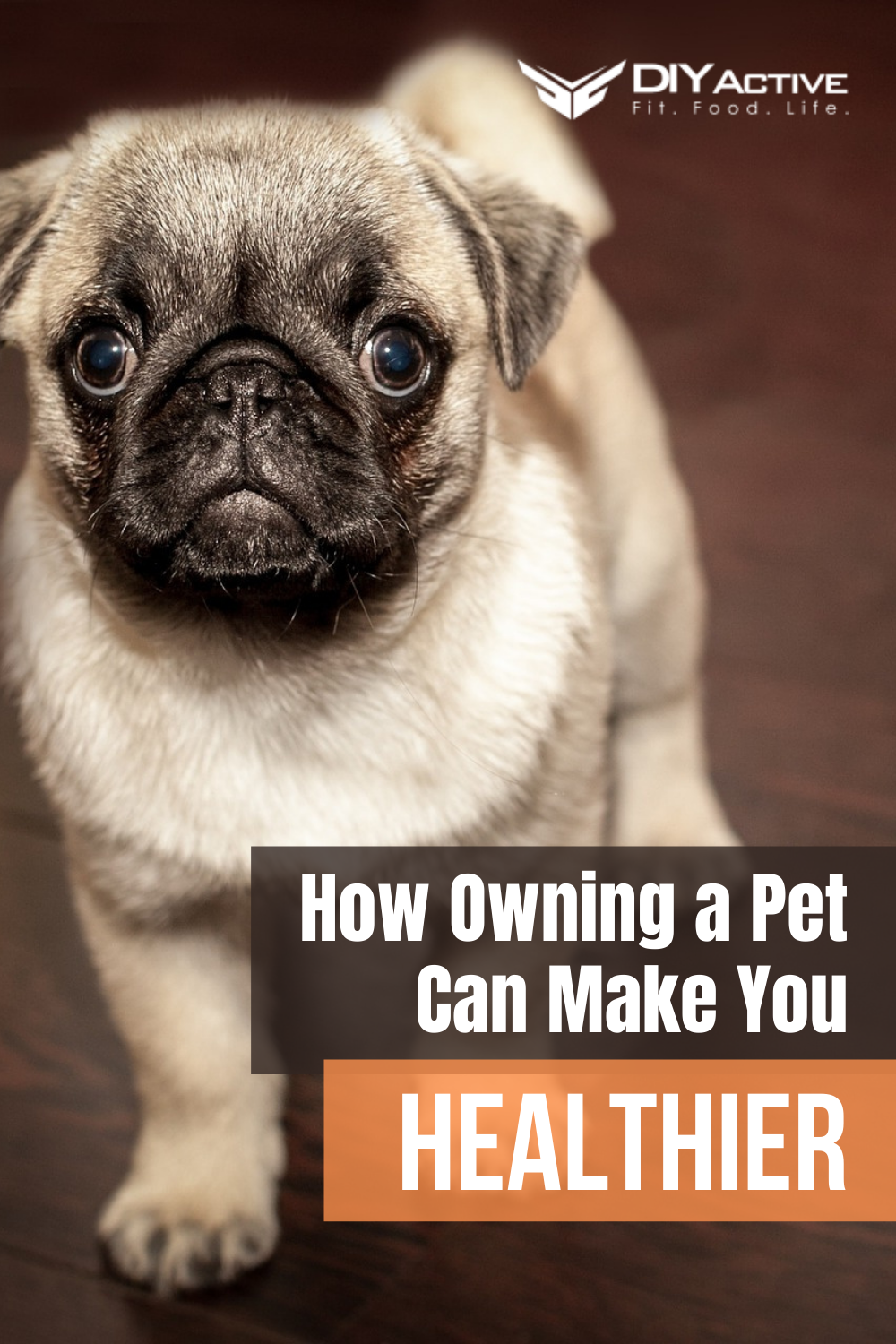 How Owning a Pet Can Make You Healthier