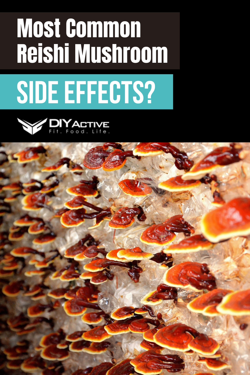 What Are the Most Common Reishi Mushroom Side Effects?